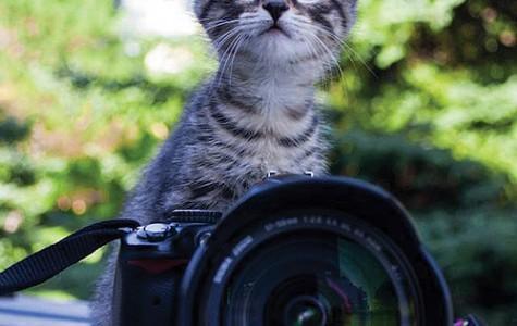 """People's Prism: """"Everyone Love Kittens"""""""