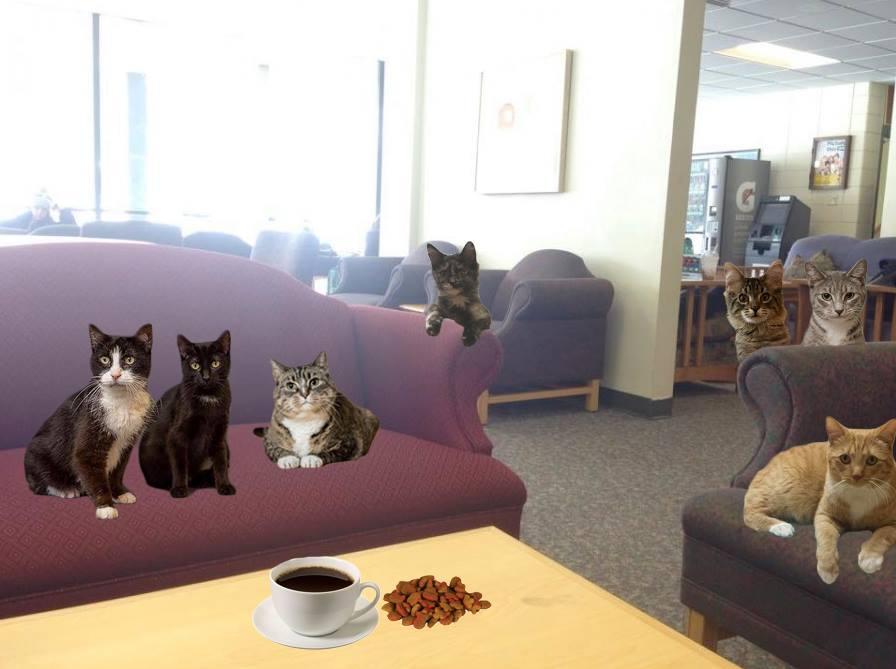 Cat café coming to campus
